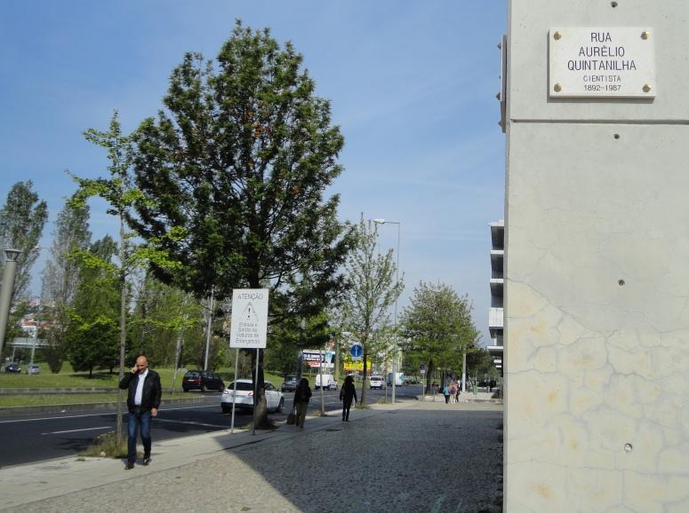 Rua Aurélio Quintanilha